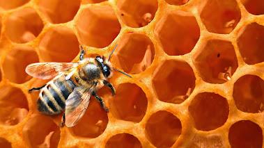 Mesilane kärjel
