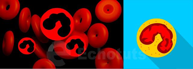 Eosinofil Sel Darah Putih biologi - echotuts