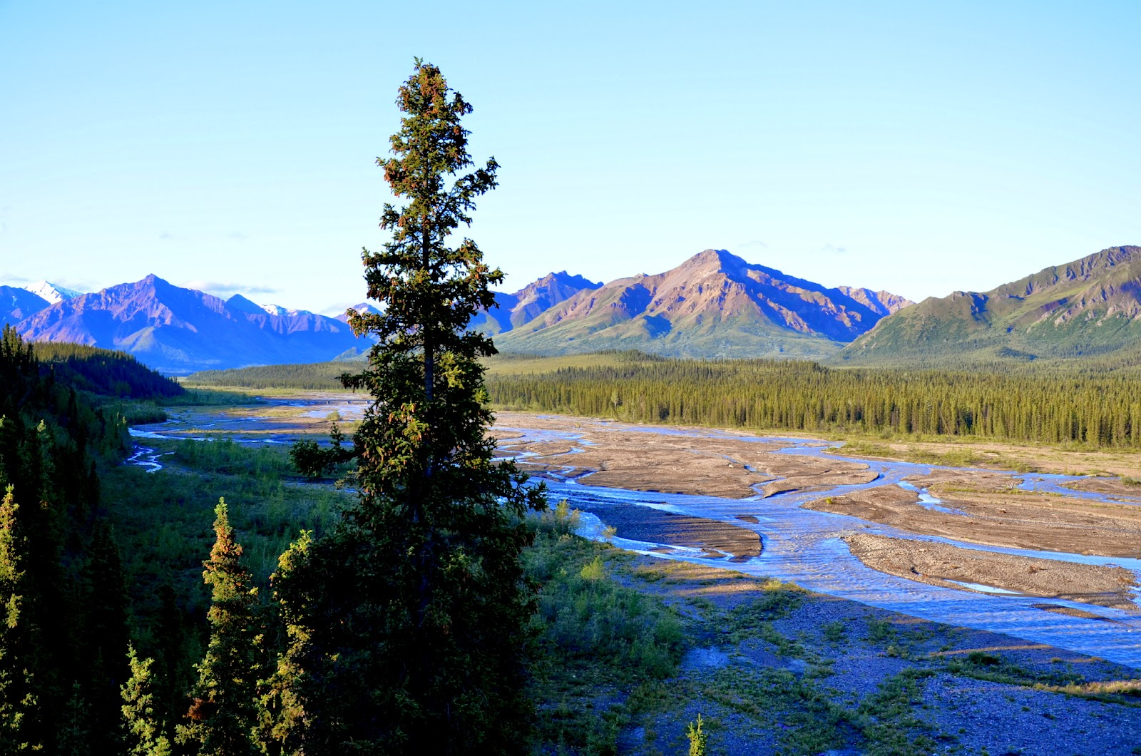 Early morning along the Savage River, Denali National Park