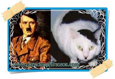 Hitler parecido con gato