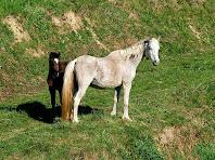 Cavalls a Can Reixac