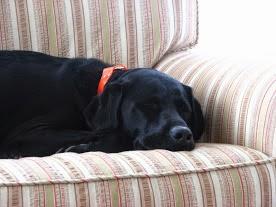 Barkley 2003 - 2014