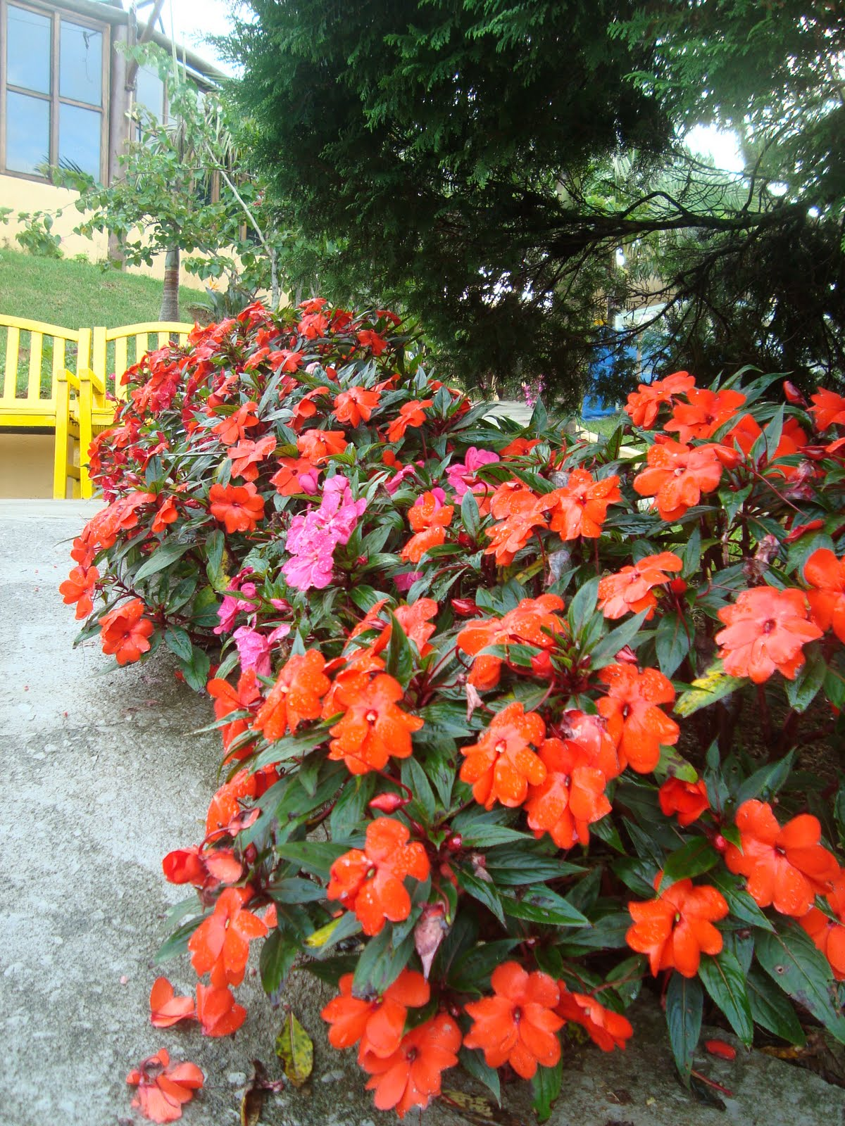 Os paisagistas plantas ornamentais de sombra - Flores de sombra ...