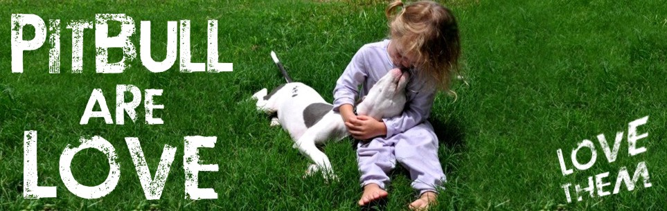 PIT BULLS ARE LIKE KIDS. IT IS HOW YOU RAISE THEM. SHOW, THEM LOVE AND THEY'LL LOVE FOR LIFE.