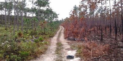Incendio en bosques de Abaco3