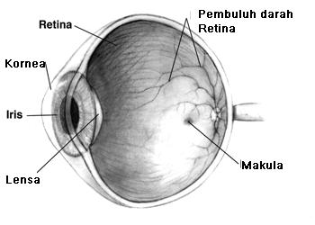 Penyebab Dan Cara Menyembuhkan Mata Minus Secara Total