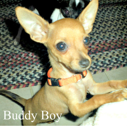 Buddy Boy
