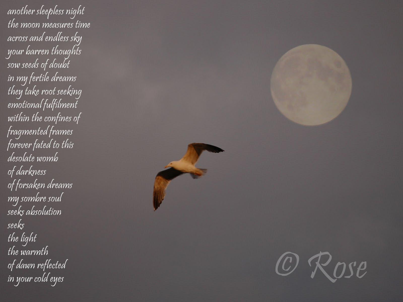 Another Sleepless Night Lyrics
