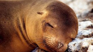 Una almohada suave foca