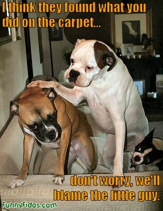 Funny Dog,funny Looking Dog,funny Dog Names,funny Dog Quotes,funny Quotes  About Dogs,