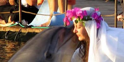 Taipan Inggris Menikahi Lumba-lumba