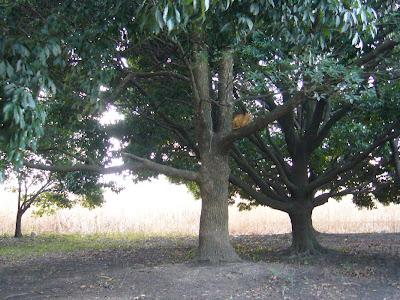 大阪府・深北緑地の猫