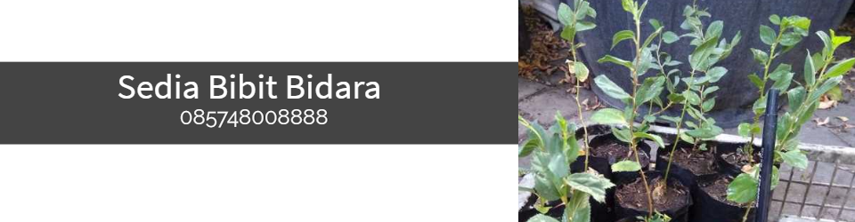 Bidara Surabaya | Bidara Sidoarjo