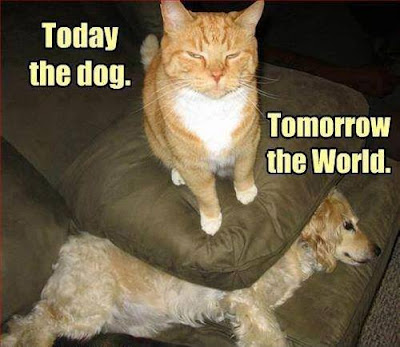 Today the dog. Tomorrow the World