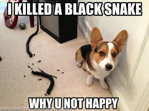 Funny puppy 14