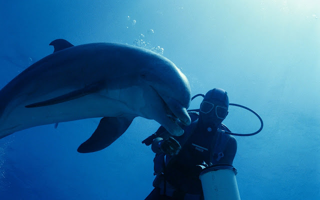 Photo of a dolphin and diver swimming underwater