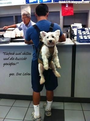 Hund auf dem Rücken seines Herrchens / Rucksack: Einfach mal chillen und das Leben genießen. Gezeichnet das Leben.