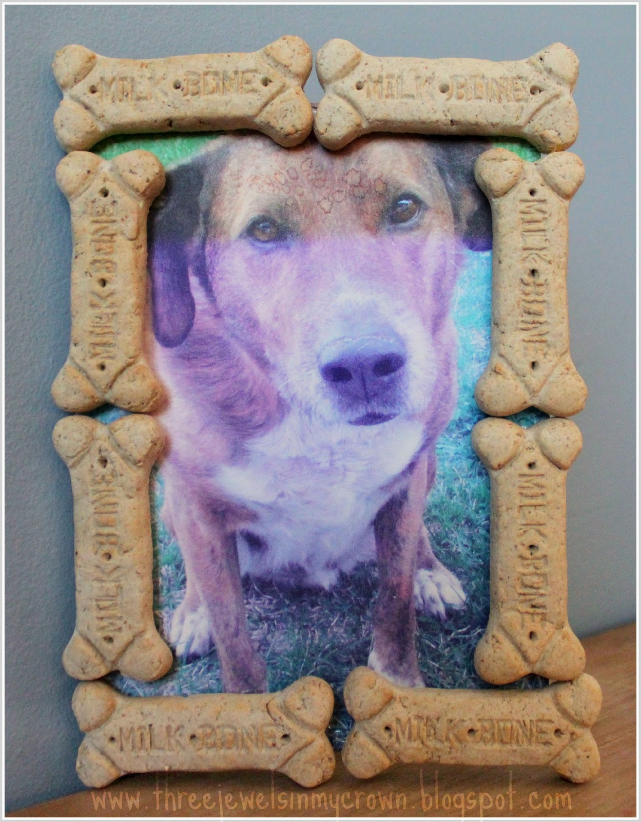Three jewels in my crown pet appreciation craft furry friend why not dedicate the entire day to pampering your pet yesterday we made a furry friend picture frame for our dog bailey jeuxipadfo Choice Image
