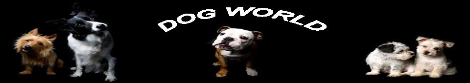 dog, animals, animals games