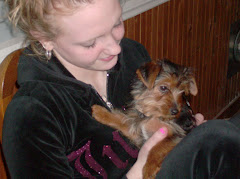 """Sir Chomps-a-Lot"" came to live with Devyn and Kris.  He's a wee Yorkie."