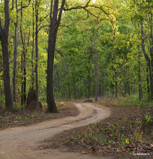 Kanha Wildlife Sanctuary
