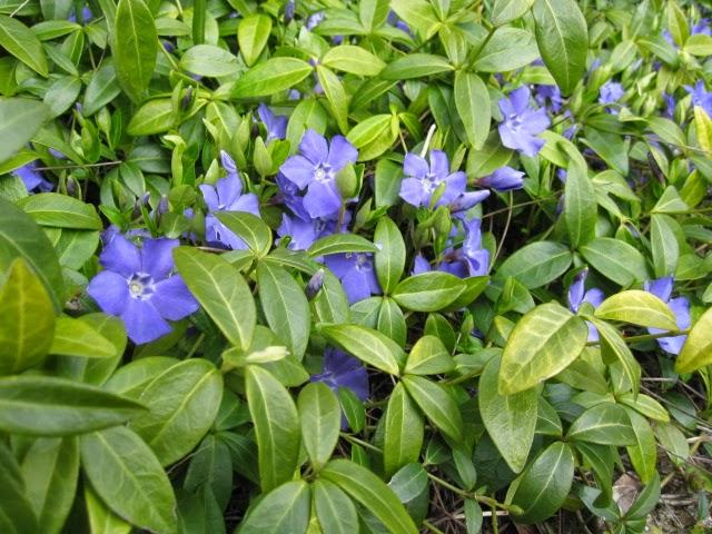 bunddække med blå blomster