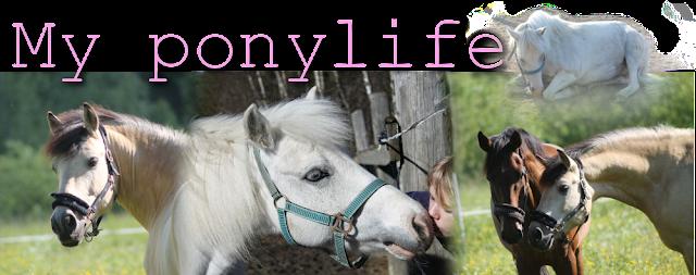 My ponylife