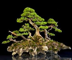 """<img src=""""bonsai6.jpg"""" alt=""""foto bonsai"""">"""