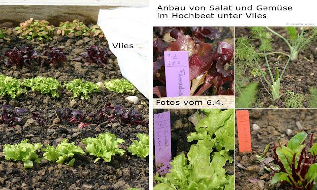 Frühes Gemüse in Weihenstephan