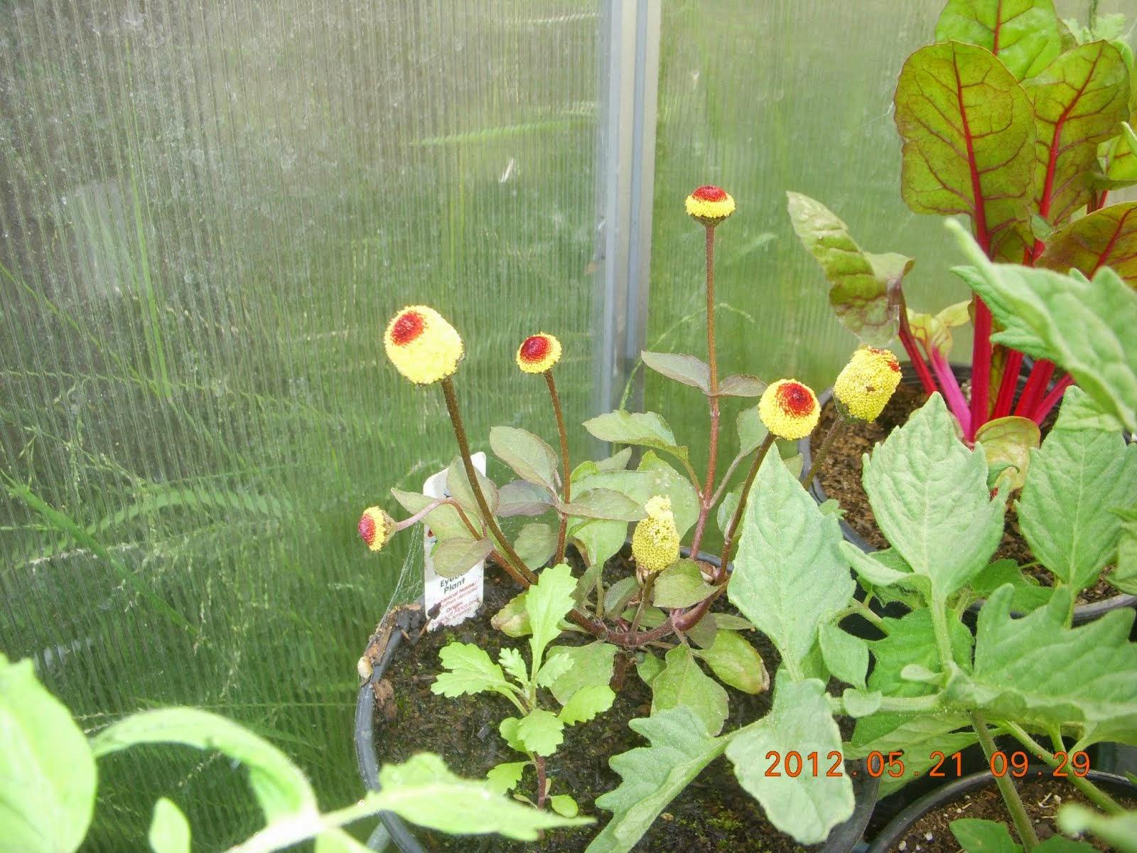∞ Exotic Plants ∞