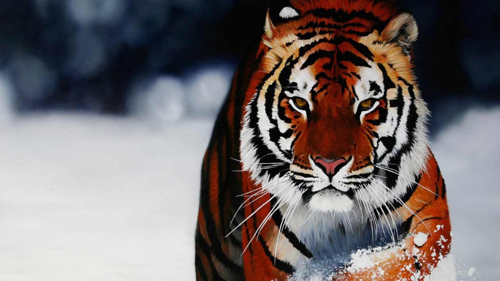 Tiger Wallpapers | HD Wallpapers | Desktop Wallapers ...