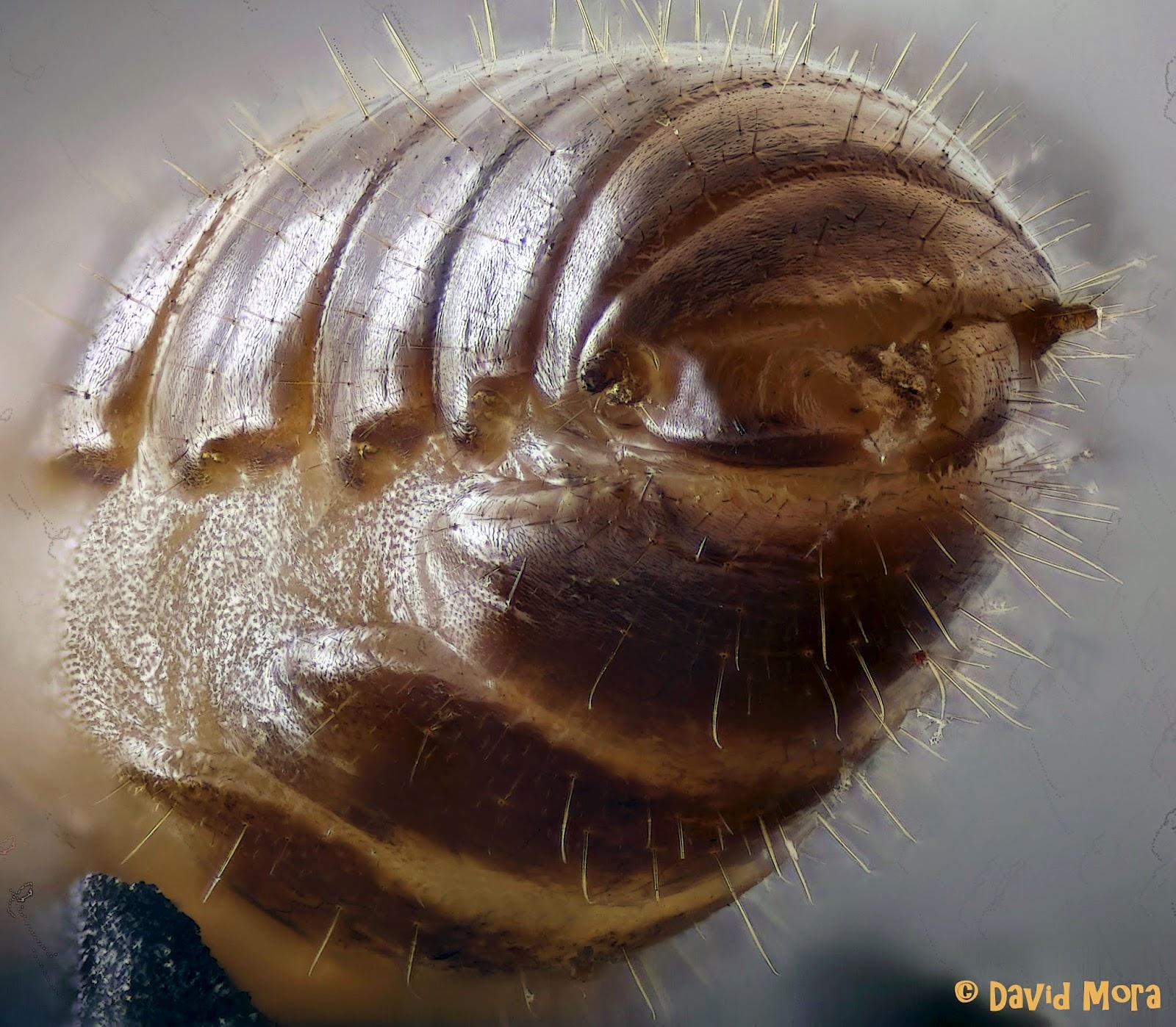 Control De Plagas En Sanidad Ambiental Las Termitas El Enemigo Invisible