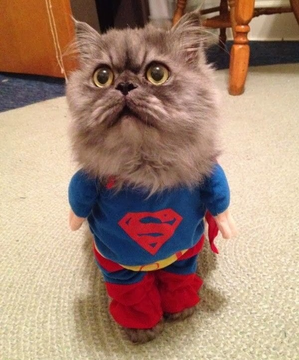 Funny cats - part 91 (40 pics + 10 gifs), cat wears superman costume