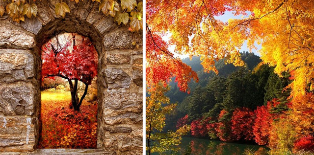 My Favourite Things About Autumn: Tree & Leaves | Katie Kirk Loves
