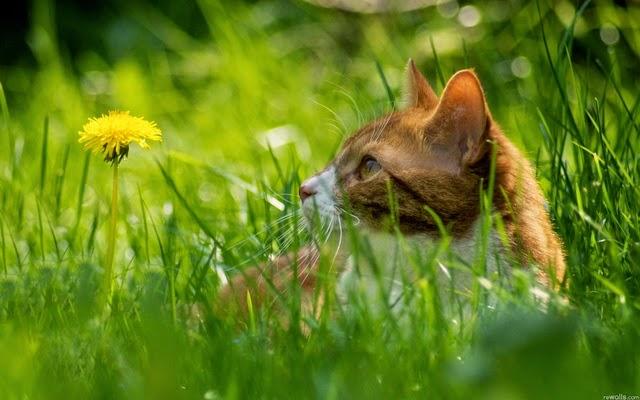 hình ảnh mèo con dễ thương nhất