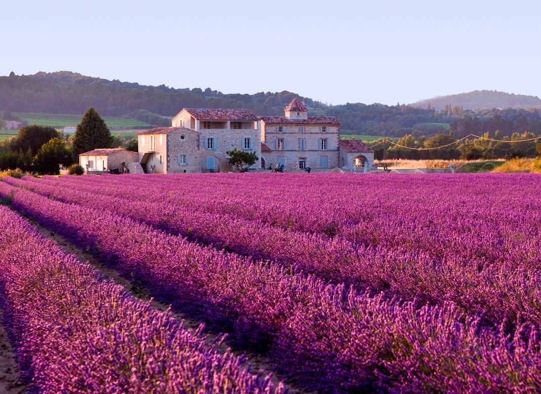 Hermosa vista de un campo lavanda en Francia.