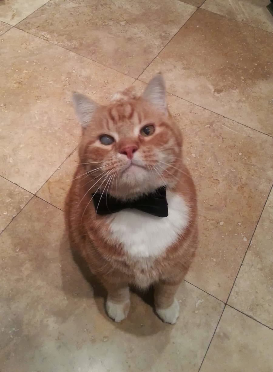 Funny cats - part 85 (40 pics + 10 gifs), cat with one smoky eye wears bowtie