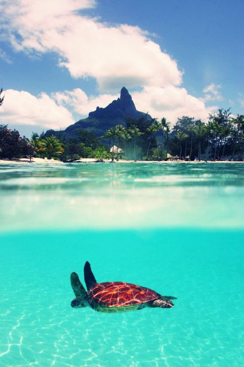 in paradise tahiti french - photo #32