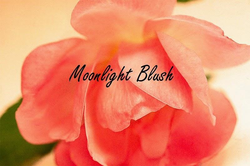 Moonlight Blush