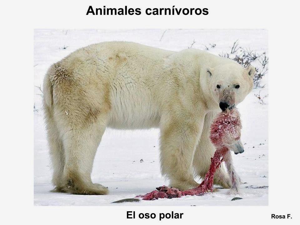 Maestra de Primaria: Animales carnívoros. Vocabulario en imágenes