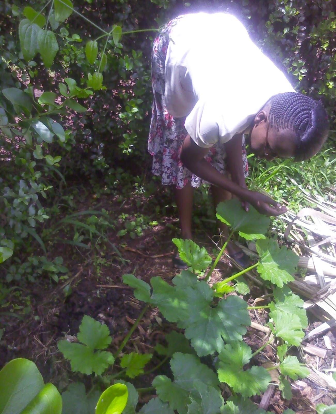 open field tomato farming in kenya