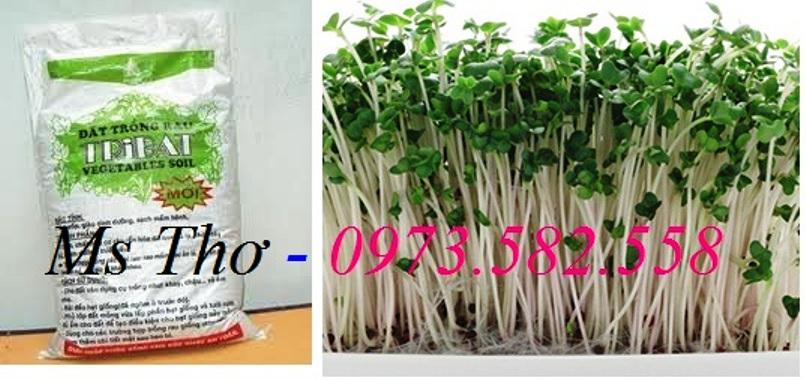 Đất tribat trồng rau mầm 20dm gía 60.000đ