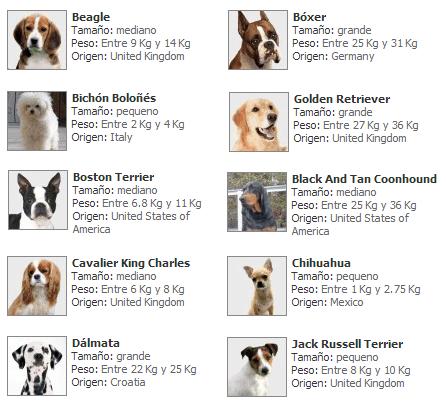 Características perros comunes