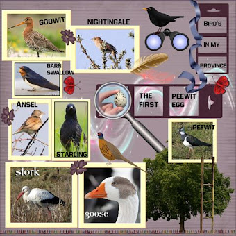 page 4  All bird's in my province