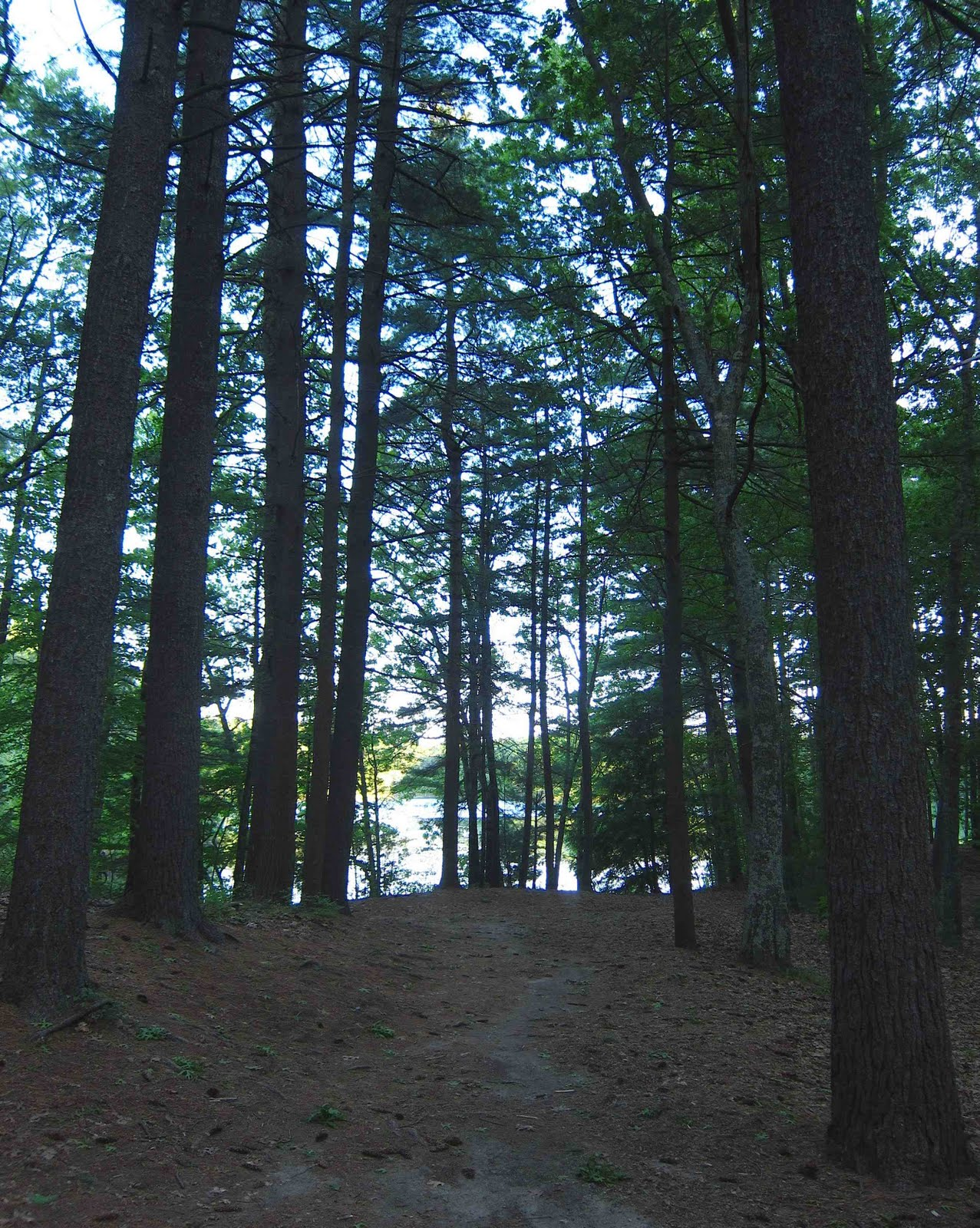 saratoga woods and waterways in thoreau s footsteps