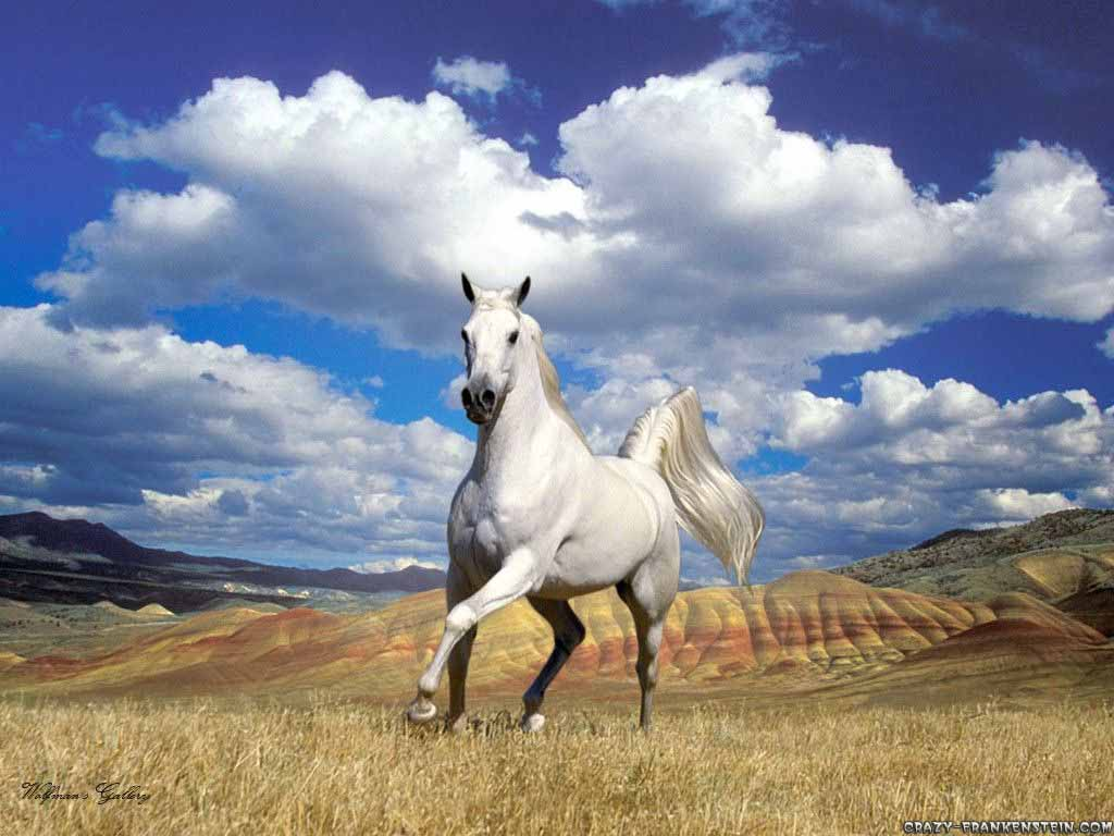 Best   Wallpaper Horse Country - stunning-horse-with-sky-wallpaper  Pictures_94393.jpg