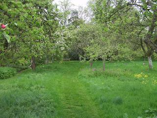 A great orchard at Hidcote.