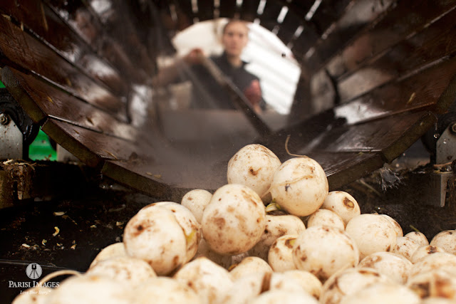white_turnips_vegetable_spray_washing_kilpatrick_family_farm_ny by sarah parisi for this beautiful life