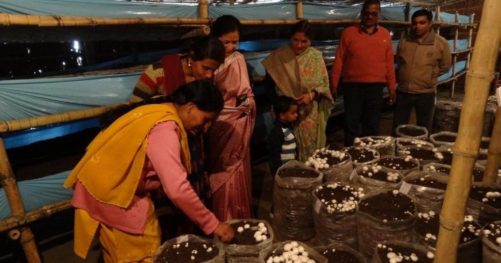 how to clean mushroom in hindi