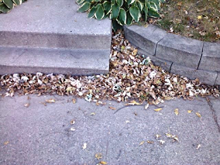 dried brown leaves covering the edges of the sidewalk.
